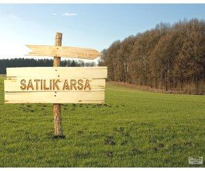 Sakarya söğütlüde acil satılık 8 140 m2 80 adet ceviz ağacı