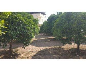 Tombul Emlak'dan Satılık Bahçe Aydın Nazilli Beşeylül Mah